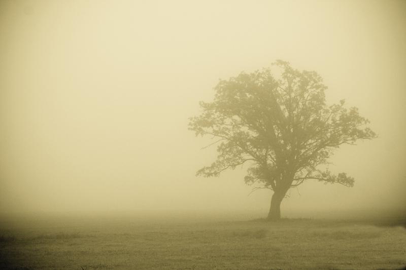 درخت و مه و غبار و... عناصری که حضورشان در یک فیلم فوراً به «شاعرانگی» تعبیر می شود